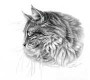 Profile Drawings Framed Prints - Norwegian Forest Cat Framed Print by Svetlana Ledneva-Schukina