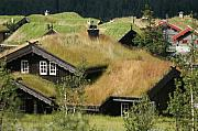 Norwegian Grass Roofs Print by Jessica Rose
