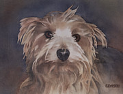 Yorkshire Terrier Watercolor Posters - Norwich Terrier Dog Poster by Teresa Silvestri