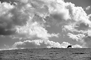 Big Sky Framed Prints - Not a Cow in the Sky - Black and White Framed Print by Peter Tellone