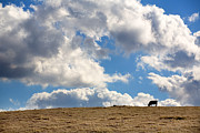 Ranch Photo Prints - Not a Cow in the Sky Print by Peter Tellone