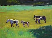 Colt Paintings - Not for Sale Yet by Susan F Greaves