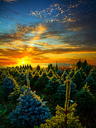 Inspirational Prints - Not Forgotten Print by Phil Koch
