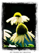 Floral Gardens Framed Prints - Not Perfect But Beautiful Framed Print by Gerlinde Keating - Keating Associates Inc