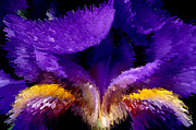Extruded Framed Prints - Not your average Iris Framed Print by Paul W Faust -  Impressions of Light