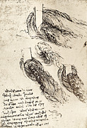 Leonardo Sketch Prints - Notes By Leonardo Da Vinci Print by Sheila Terry