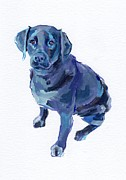 Black Lab Prints - Nova Print by Kimberly Santini