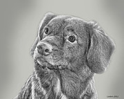 Canine Digital Art - Nova Scotia Duck Retriever by Larry Linton