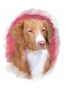 Retriever Digital Art - Nova Scotia Duck Tolling Retriever  29 by Larry Matthews