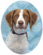 Retriever Digital Art - Nova Scotia Duck Tolling Retriever 439  by Larry Matthews