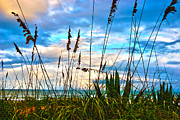 Sea Grass Metal Prints - November Day at the Beach in Florida Metal Print by Susanne Van Hulst