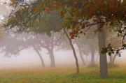 Live Oaks Originals - November Fog by Bill Morgenstern