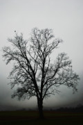 Lone Tree Framed Prints - November Tree In Fog Framed Print by Patricia Motley