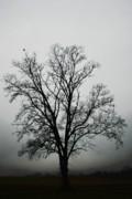 November Tree In Fog Print by Patricia Motley