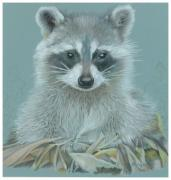 Raccoon Drawings - Now I lay me down to sleep by Vera Rodgers