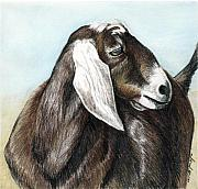 Goat Painting Originals - Nubian Goat by Charlotte Yealey