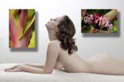 Nudes Canvas Posters - Nude Art Gallery Poster by Harry Spitz