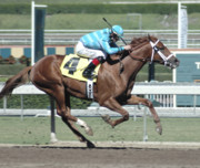 Race Horse Photos - Number 4 Alone by Clarence Alford