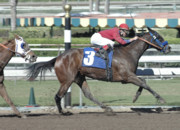 Race Horse Photos - Number Three by Clarence Alford