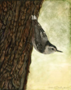 Scratchboard Paintings - Nuthatch Acrobat by Susan Donley