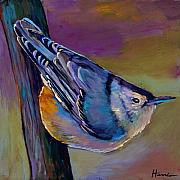 Songbird Paintings - Nuthatch by Johnathan Harris