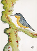 Beardedladygreetings Tapestries - Textiles Prints - Nuthatch SIX Print by Alexandra  Sanders