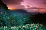 45 Framed Prints - Nuuanu Pali State Park Framed Print by Brent Black - Printscapes