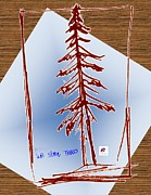 Drawings  - NW Evergreen Tree by Carol Rashawnna Williams