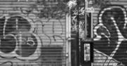Nyc Graffiti Blk N Wht Print by Chuck Kuhn