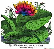 Of The Old School Prints - Nymphaea Print by Eric Edelman