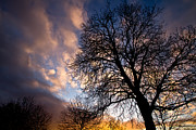 Oak Tree Metal Prints - Oak against the Sky Metal Print by Justin Albrecht