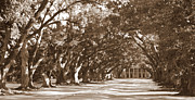 Oak Alley Plantation Photo Prints - Oak Alley - Sepia Digital Painting Print by Carol Groenen