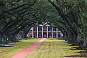 Oak Alley Plantation Photo Prints - Oak Alley Print by Perry Webster