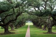 Oak Alley Plantation Photo Prints - Oak Alley Print by Peter Verdnik