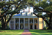 Live Oaks Photo Framed Prints - Oak Alley Plantation Framed Print by Carol Groenen