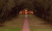 Oak Alley Plantation Print by Jonas Wingfield