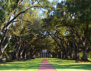 Mississippi Photographs Prints - Oak Alley Plantation Print by Maggy Marsh