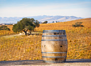 Grapevines Prints - Oak Barrel at Vineyard Print by David Buffington