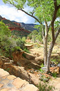 Red Rocks Of Sedona Prints - Oak Creek Canyon at Slide Rock Print by Carol Groenen