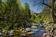 Oak Creek Canyon Prints - Oak Creek Print by Robert Bales