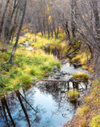 Oak Creek Photos - Oak Creek Twilight by Carl Amoth