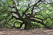Angel Oak Photograph Prints - Oak from the day  Print by Sabrina  Hall