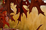 Vivid Fall Colors Art - Oak Leaf Diamonds by Susan Herber