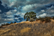 Grassy Hill Posters - Oak on a Hill Poster by Bonnie Bruno
