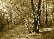Fantasy Dreamy Oak Trees Posters - Oak on a Slope sepia Poster by Maynard Smith