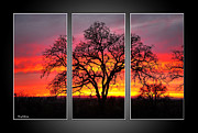 Office Wall Posters - Oak Silhouette Tryptych 1 Poster by Cheryl Young