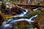 Oak Creek Prints - Oak Stream Print by Christopher Lugenbeal