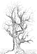 Tree Of Life Drawings - Oak tree abstract study by Regina Valluzzi