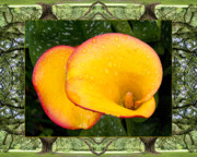 Lilies Posters - Oak Tree Cala Poster by Bell And Todd