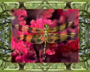 Flower Photos Framed Prints - Oak Tree Dragonfly Framed Print by Bell And Todd